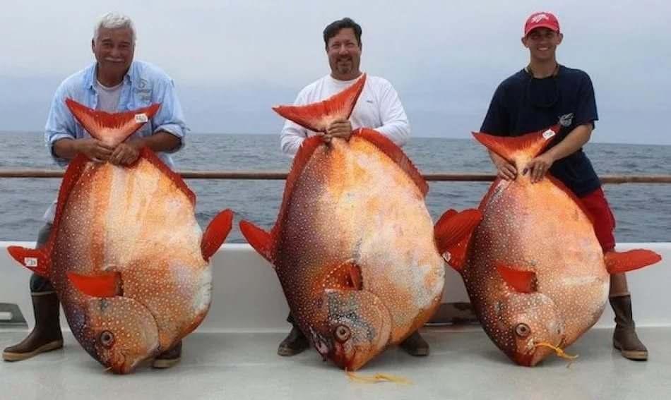 как в океане ловят больших рыб видео
