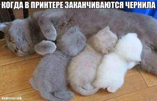 Кошаки.jpg