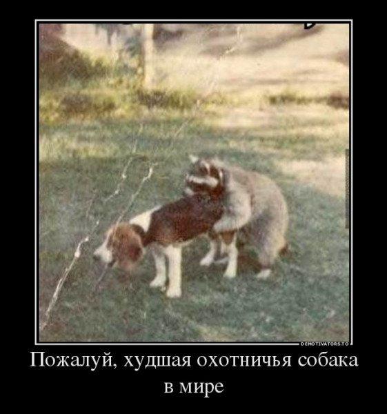 05_Худшая охотничья.jpg