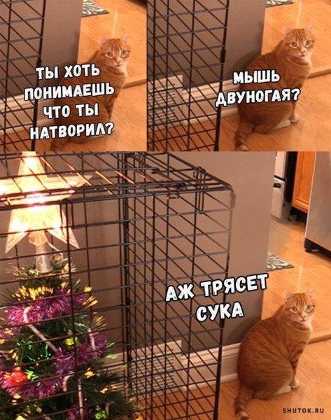 03_Мышь двуногая.jpg