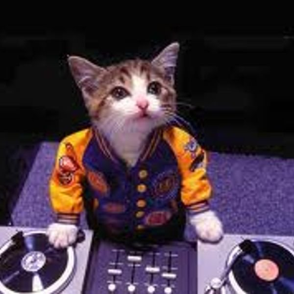 DJ_Cat.jpg