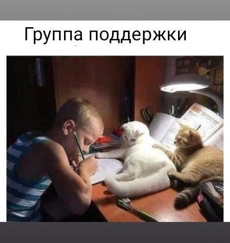 Котоподдержка.jpg