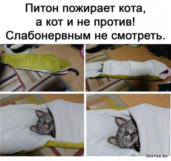 Питон и кот.jpg