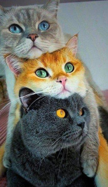 Кошачий светофор.jpg