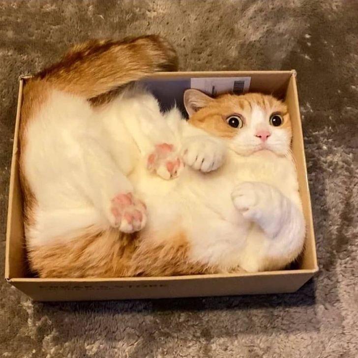 Рыжик в коробке.jpg