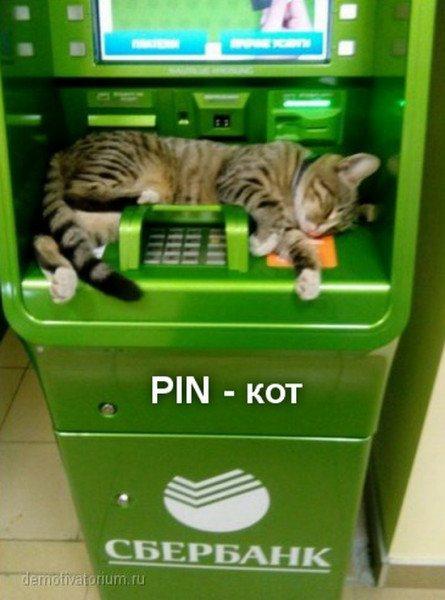 Пин-кот.jpg