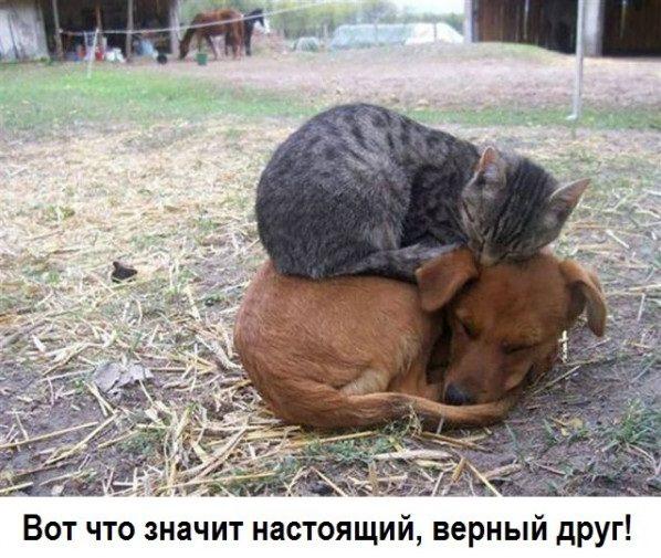 Пес и кот спят друг на друге.jpg
