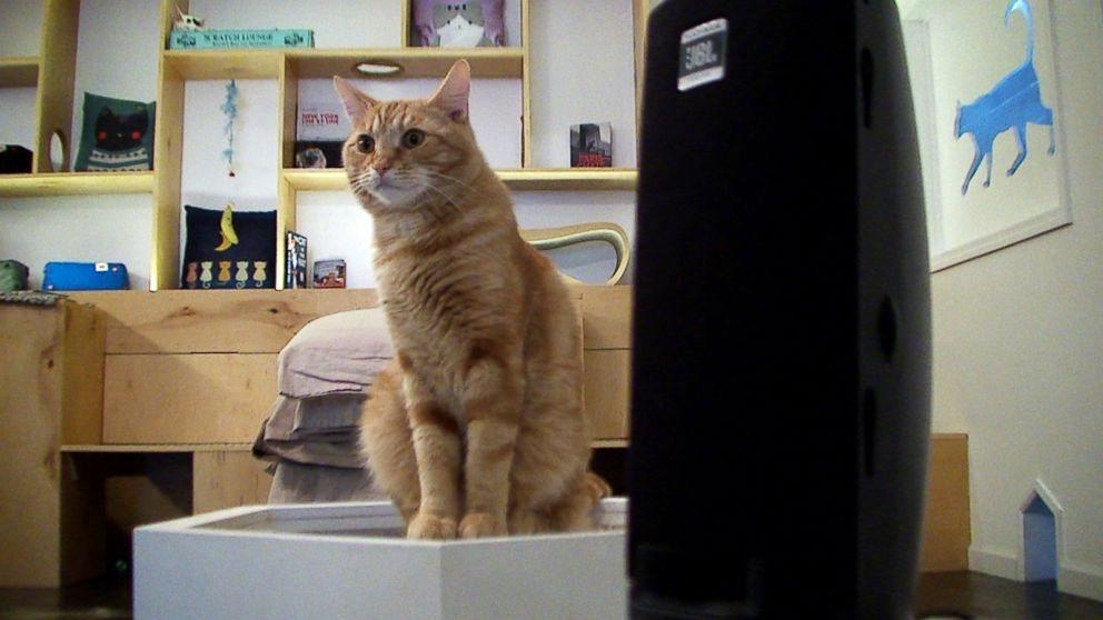 abc_meow_parlour_cat_cafe_01_jc_150406_16x9_992.jpg